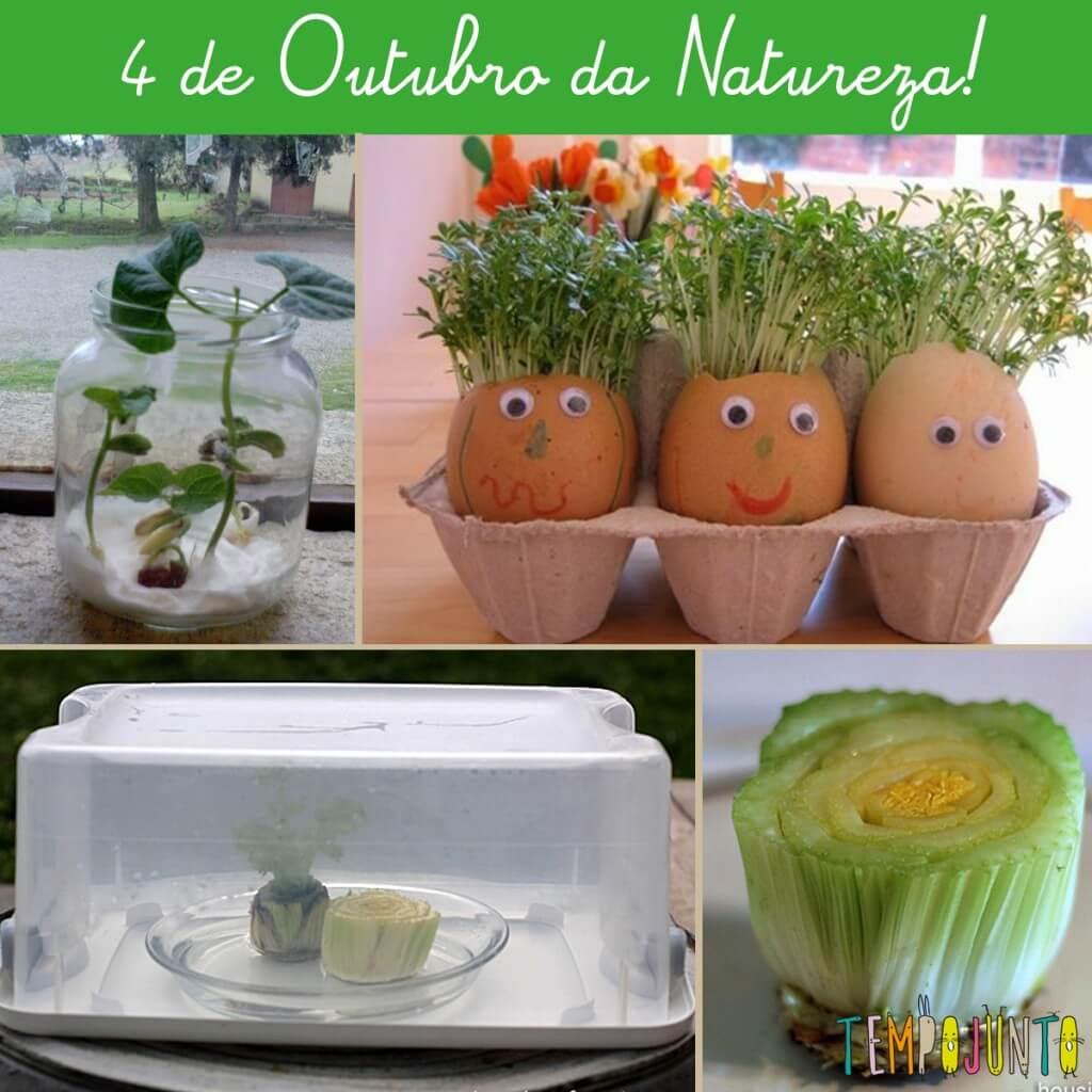 Plantando em casa com as crianças no dia da Natureza!