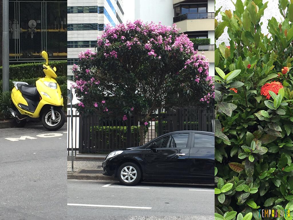 Quando o passeio na rua vira uma grande brincadeira - arvore com as flores e moto amarela
